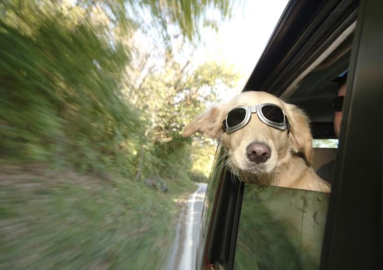 prepara sillas para perros, viajar con perro