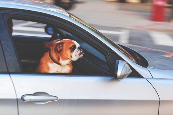 Algunas razones por las cuales no es recomendable tener objetos sueltos dentro de la cabina de tu vehículo