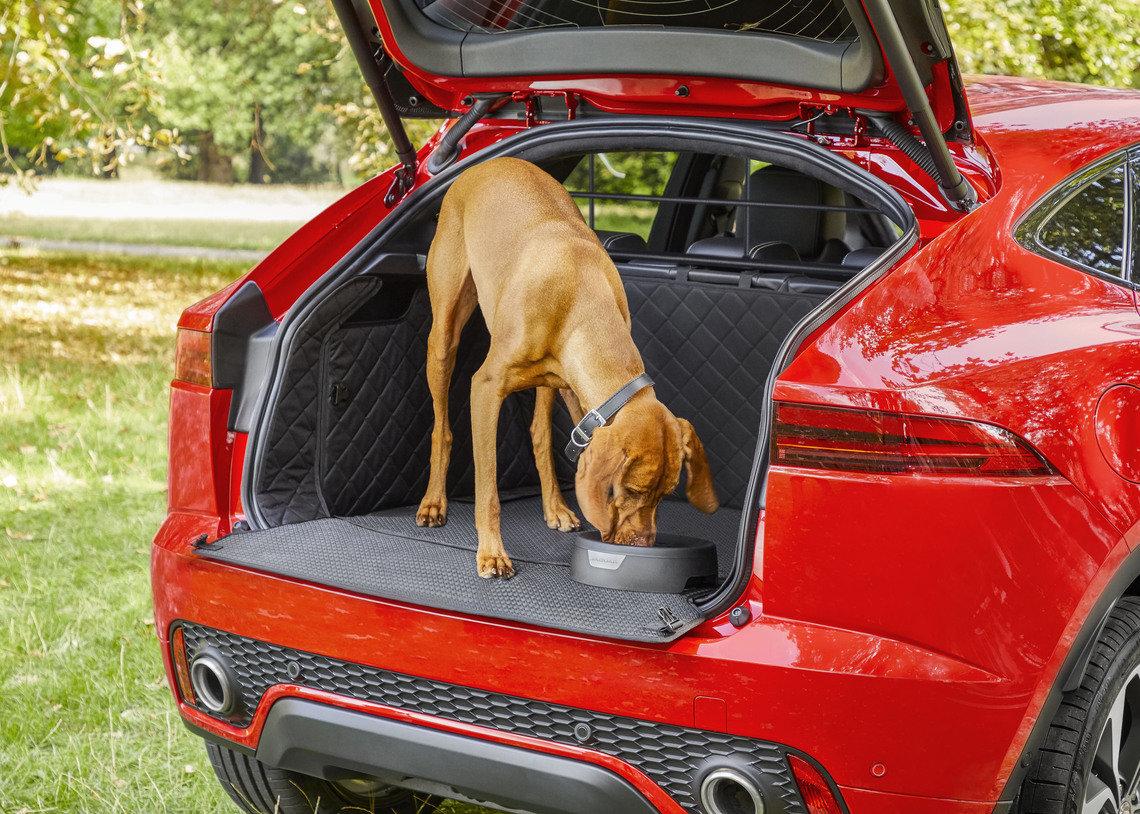 Viaja con tu mascota al estilo de Jaguar