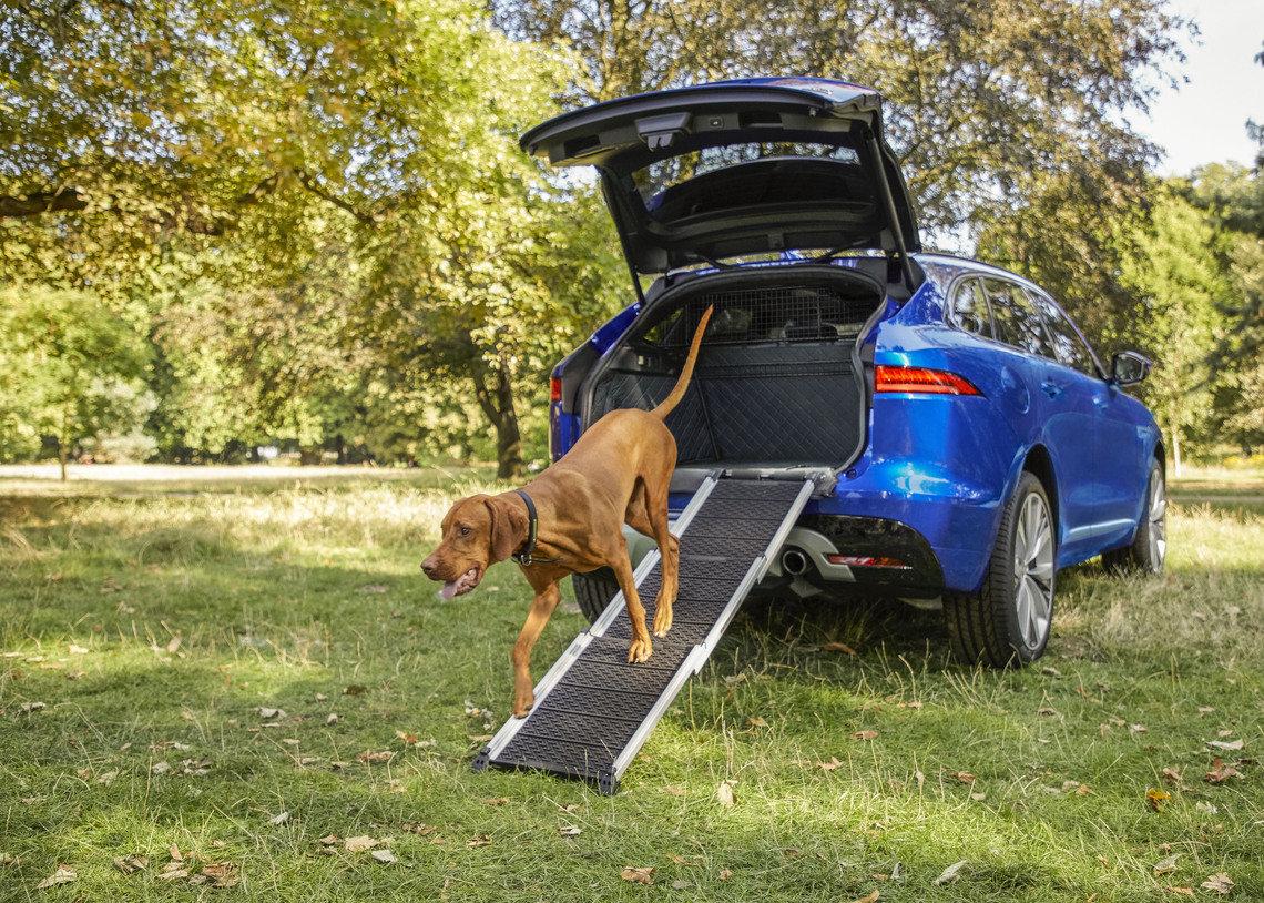 Cinco autos ideales para viajar con tu mascota