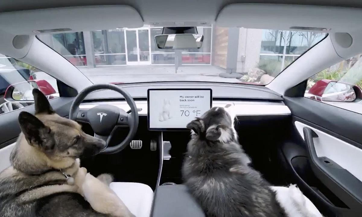 Dog Mode Tesla Model 3
