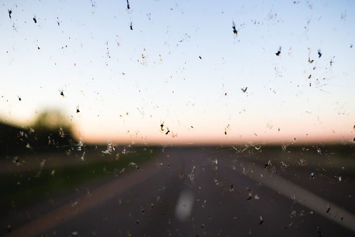 insectos parabrisas