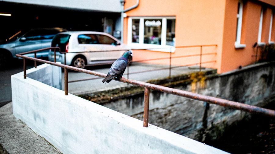 Ford asegura que los excrementos de las aves es muy corrosivo