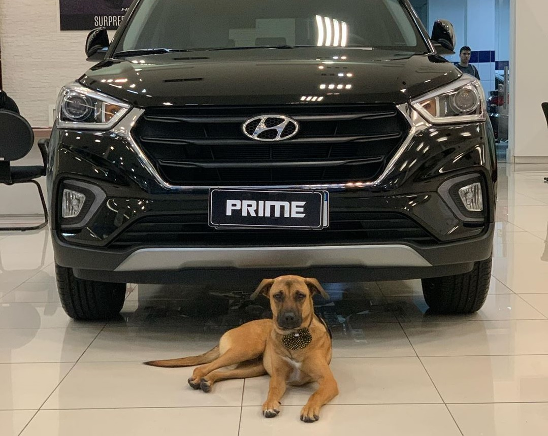 Tucson Prime, el empleado de cuatro patas de Hyundai