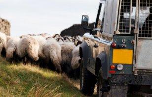 Cómo conducir en carreteras con animales sueltos