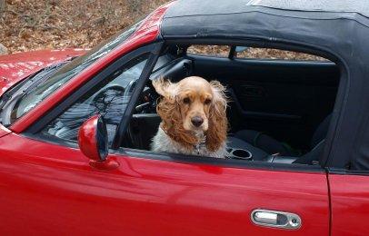 ¿Cómo quitar los pelos del perro de los asientos del automóvil?