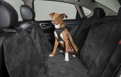 Nissan X-Trail está lista para llevar a tu mascota