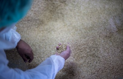 SEAT trabaja en piezas de autos hechas de arroz